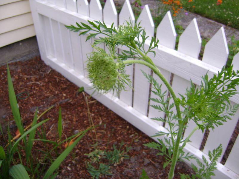 Garden June09 014
